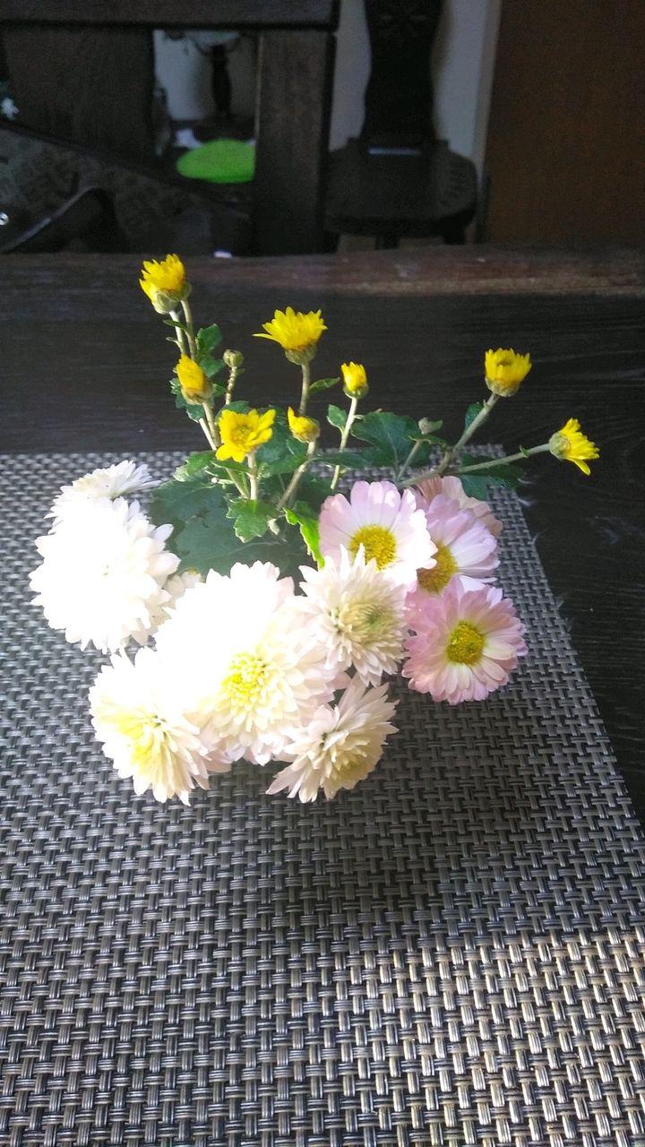 可愛い菊、みつけました